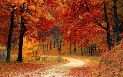 Tipps gegen den Herbst